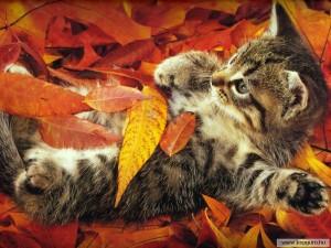 Ősz -cicával